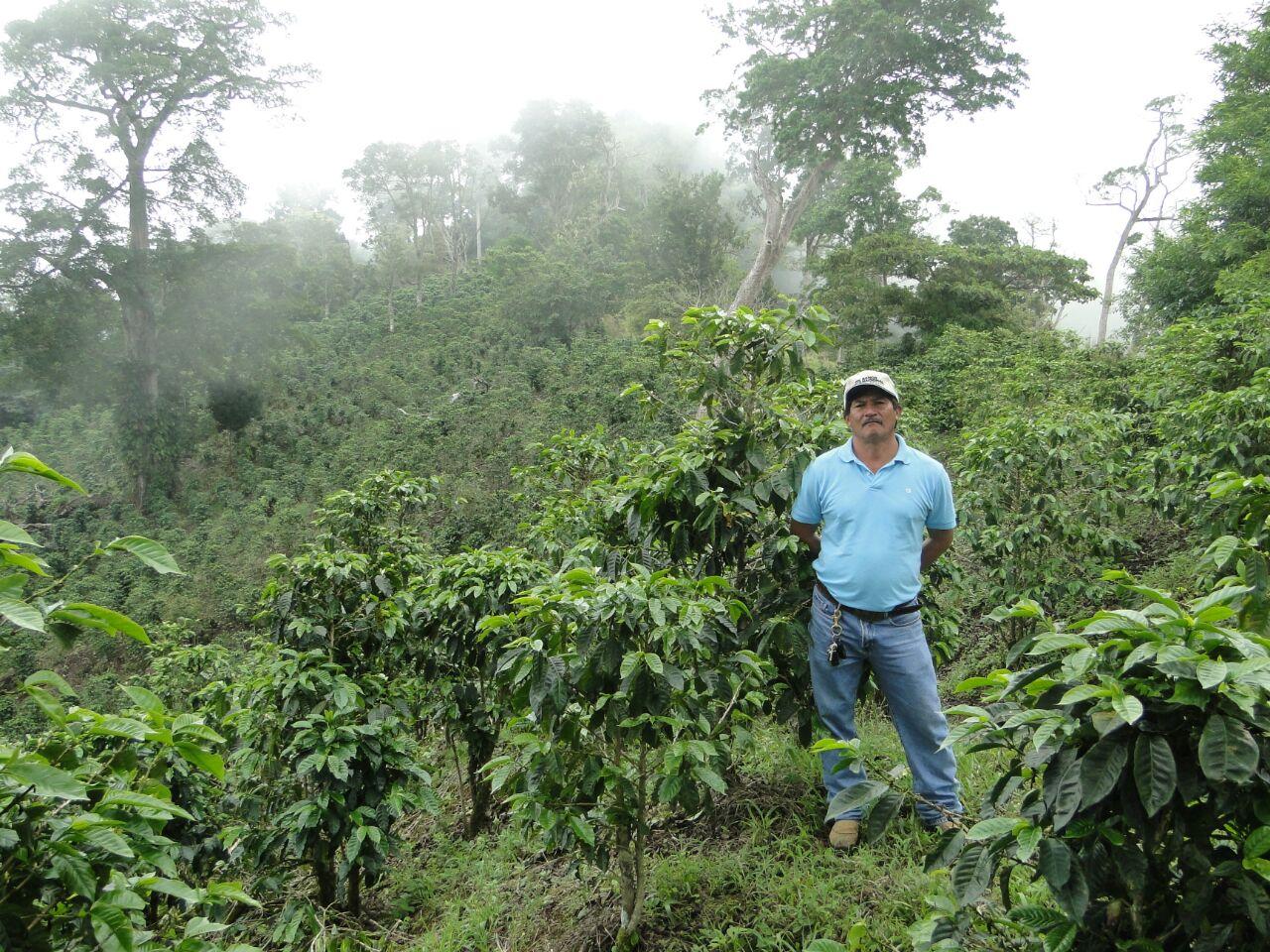 Don Cheo, producteur de notre café Panama